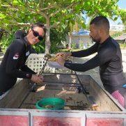 manta-diving-nosy-be-coral-garden-galley-02