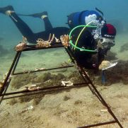 manta-diving-nosy-be-coral-garden-galley-09