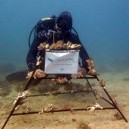 manta-diving-nosy-be-coral-garden-galley-11