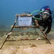 manta-diving-nosy-be-coral-garden-galley-12