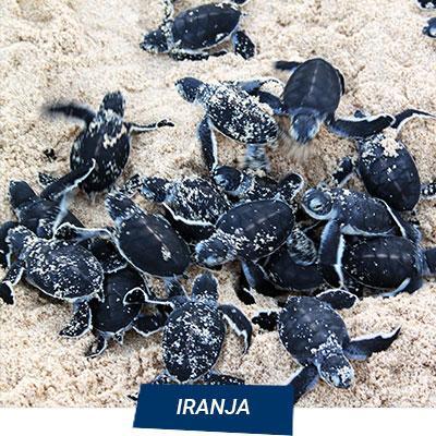 Manta Diving Nosy Be - Escursioni Mare - Iranja