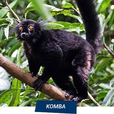 Manta Diving Nosy Be - Escursioni Mare - Komba