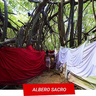 Manta Diving Nosy Be - Escursioni Terra - Albero Sacro