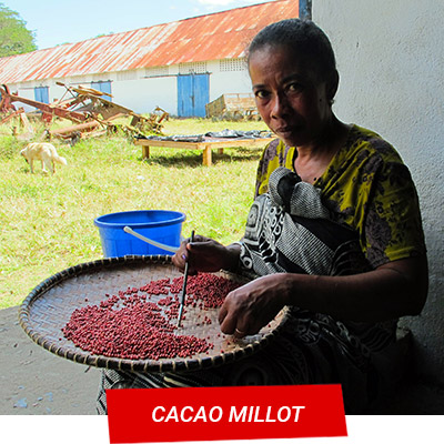 Manta Diving Nosy Be - Escursioni Terra - Cacao Millot