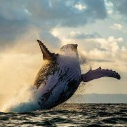manta-diving-nosy-be-whale-watching-in-madagascar-gallery-03