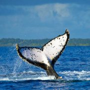 manta-diving-nosy-be-whale-watching-in-madagascar-gallery-06