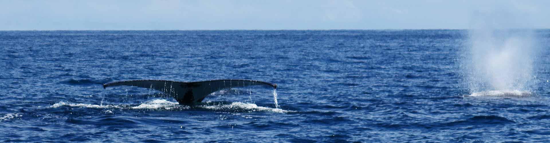 Manta Diving - >Biologia marina - Balene