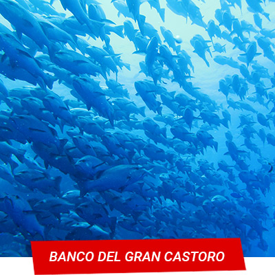 Manta Diving Nosy Be - Banco del Gran Castoro