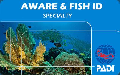 Manta Diving Nosy Be - Corsi - Aware Coral Reef