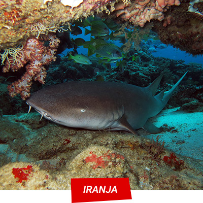 Manta Diving Nosy Be - Iranja