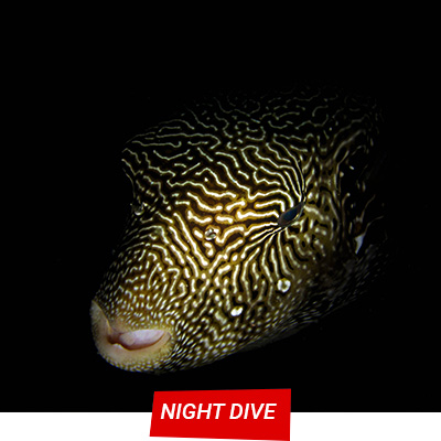 Manta Diving Nosy Be - Night Dive