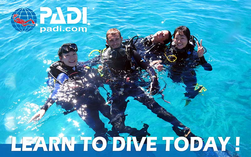 Manta Diving Nosy Be - Padi - Learn to dive today