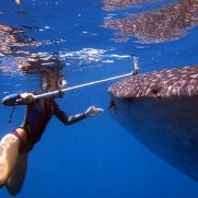 manta-diving-nosy-be-whale-shark-whatching-gallery-02