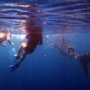 manta-diving-nosy-be-whale-shark-whatching-gallery-03
