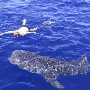 manta-diving-nosy-be-whale-shark-whatching-gallery-05