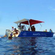 manta-diving-nosy-be-whale-shark-whatching-gallery-06