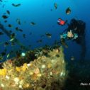 manta-diving-nosy-be-alfredo-milazzo-01