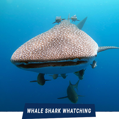 Manta Diving - Nosy Be - Whale Shark Watching