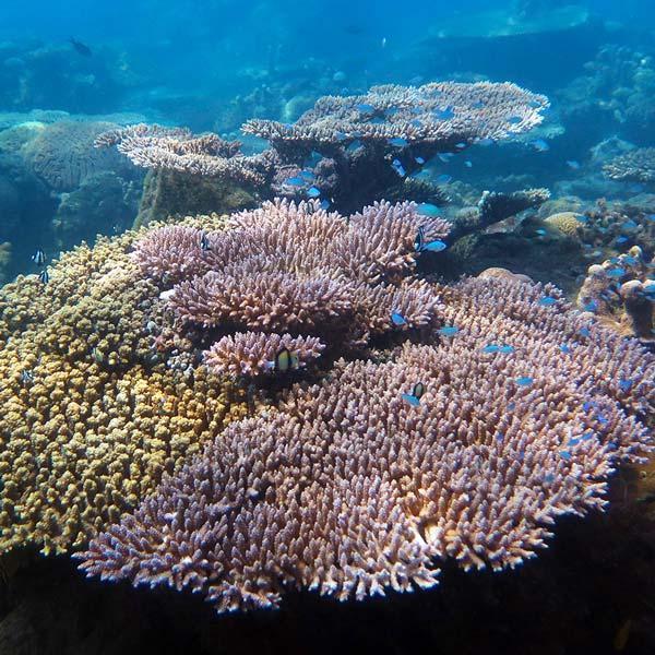 Manta Diving - Nosy Be - Biologia - Coralli