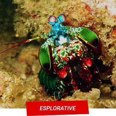 Manta Diving - Nosy Be - Esplorative